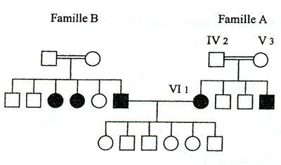 Généalogie de deux familles sur trois générations