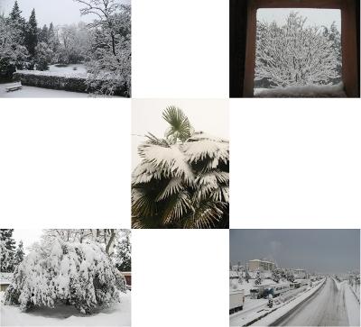 Arbres, palmiers et autoroute sous la neige