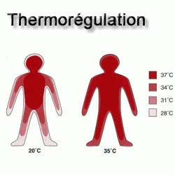 Thermorégulation