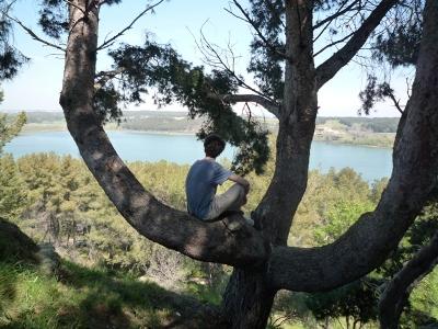Sirtin surplombé sur une branche d'arbre et qui contemple un étang