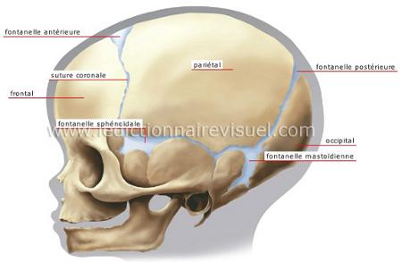 Crâne d'enfant