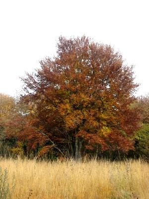 Un grand arbre aux feuilles oranges et rouges