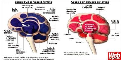 Coupes sexistes d'un cerveau d'homme et d'un cerveau de femme