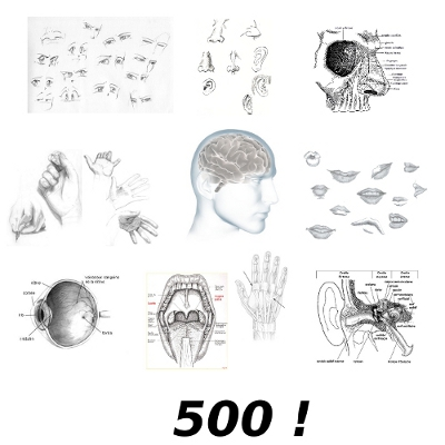 Croquis de bouche, nez, mains, oreilles, yeux autour d'un cerveau pour illustrer les cinq sens