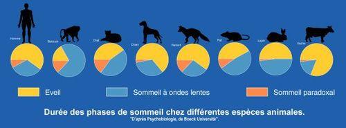 Durée des phases de sommeil chez différentes espèces animales