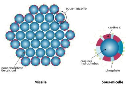 Agglutination de sous-micelles de caséine de lait