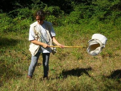Capture des araignées avec un filet