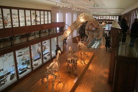 Galerie d'exposition du vivant