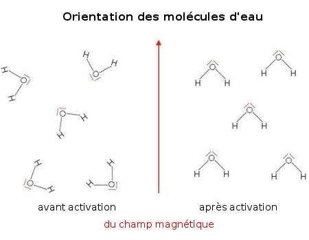 Orientation des molécules d'eau avant et après activation du champ magnétique