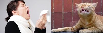 sirtin les chats peuvent tre allergiques aux poils des humains. Black Bedroom Furniture Sets. Home Design Ideas