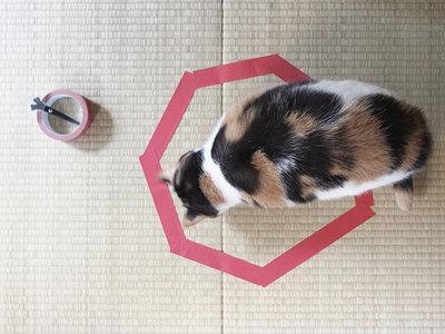 Un chat curieux vient examiner le cercle