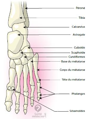 Schéma d'un pied humain