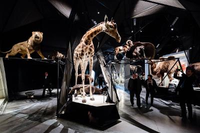 Une salle contenant des animaux empaillés