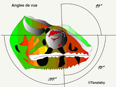Angles de vue du caméléon