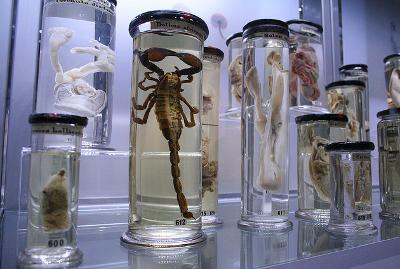 Plusieurs bocaux contenant des organismes