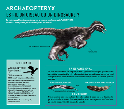 Fiche du livre sur l'Archaeopteryx